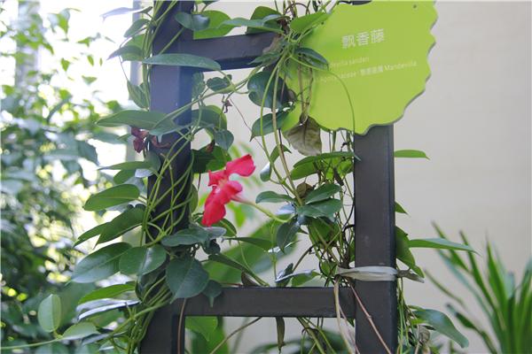 园内植物知多少?