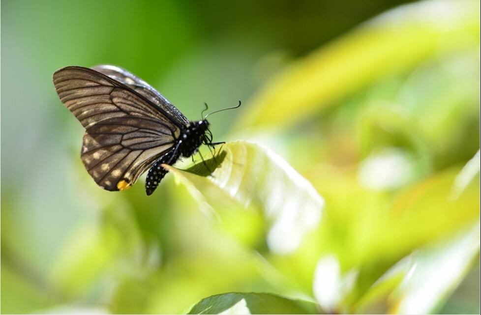 蝴蝶园内的蝴蝶,你都认识吗?